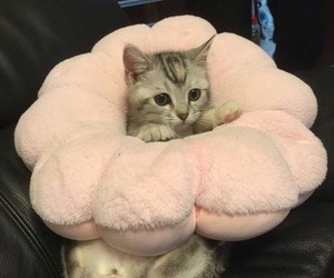 aesthetic, cat, and soft image