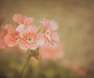 beautiful, flower, and nature image