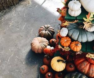 autumn, fall, and pumpkin image