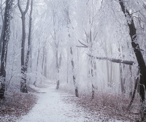 etsy, nature photography, and winter landscape image