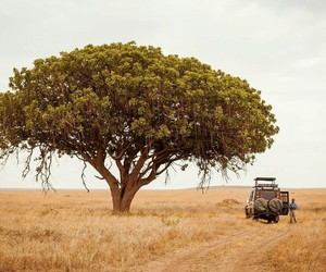 africa, campo, and field image