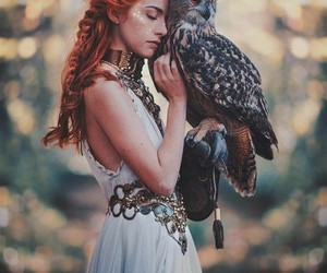 owl, nature, and photography image