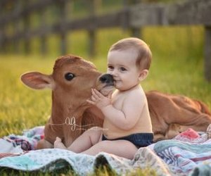 babies, country living, and farm image
