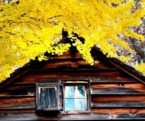 cabin, country living, and rustic image