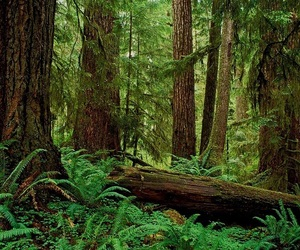 fantasy, rainforest, and trees image