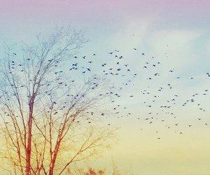 beautiful, bird, and clouds image