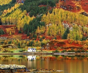 autumn, nature, and scotland image