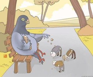 funny, pigeon, and bird image