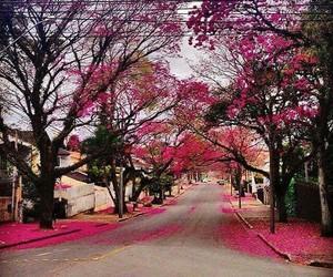 curitiba and cerejeiras image