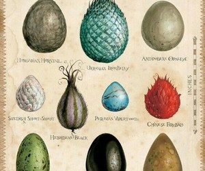dragon, harry potter, and eggs image