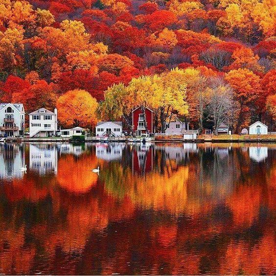 article, beautiful, and autumn image