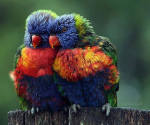 beauty, birds, and colorful image
