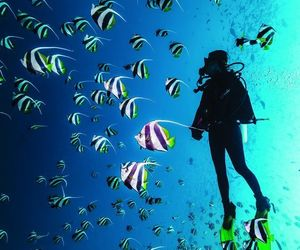 scuba diving, we heart it, and bucket list image