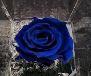 blue and rosa vera image