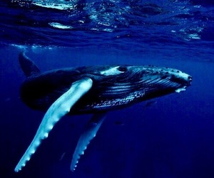 whale, blue, and ocean image