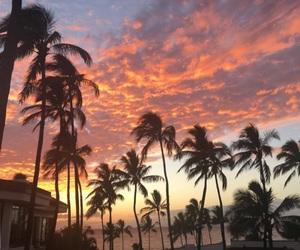 palms, sunset, and sky image