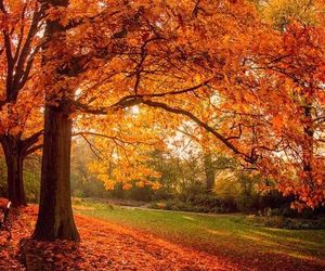 autumn and nature image
