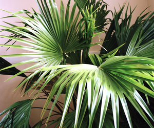 green, tropical, and leaves image