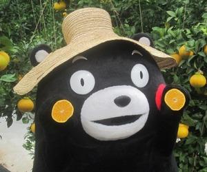 japan, tumblr, and kumamon image