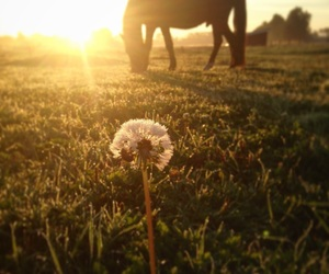 horse and sunrise image