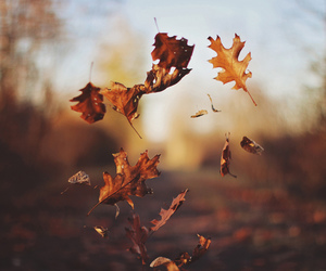 november, autumn, and fall image