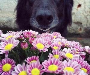 animal, dog, and flowers image