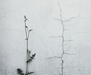 life, plant, and street image