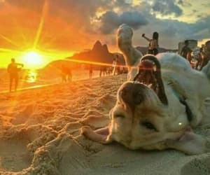 dog, summer, and cute image