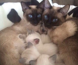 cat, animal, and family image