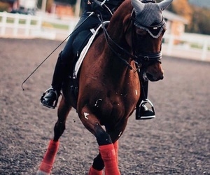 equestrian and horse riding image