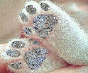 cat and diamond image