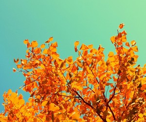 autumn, blue, and tree image