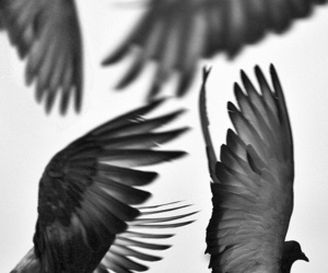 birds, wings, and black and white image