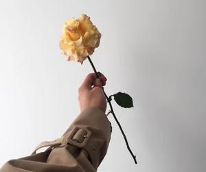 flower, inspiration, and garden image