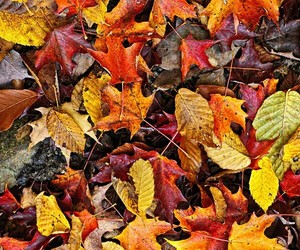 autumn, colors, and Dry Leaves image