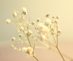 flowers, fotografia, and pink image