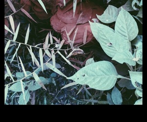 grass, nature, and vscocam image
