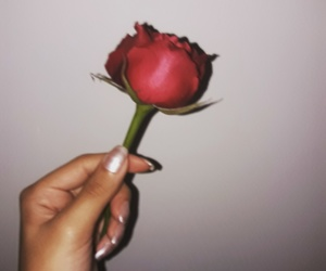 cutie, flower, and rose image