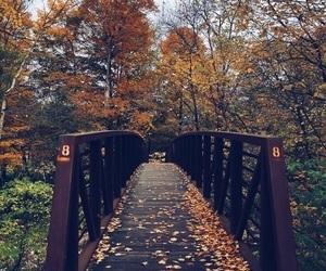 breath, amazing, and autumn image