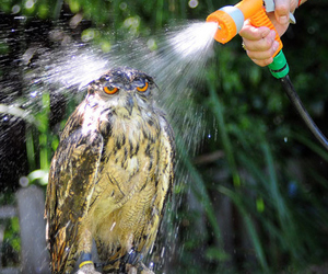 owl, water, and not amused image