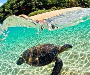 clear water, goals, and Island image