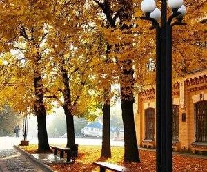 autumn, beautiful, and falling image