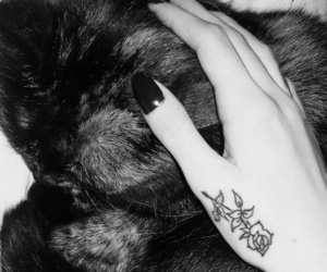 black, cat, and hand image
