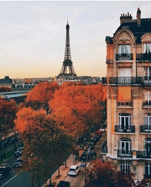 autumn, paris, and fall image