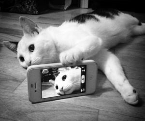 black and white, meow, and cat image