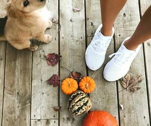 dog, fall, and autumn image