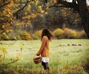 amazing, autumn, and beauty image
