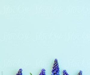 wallpaper iphone image