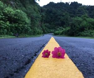 el salvador, flowers, and open road image