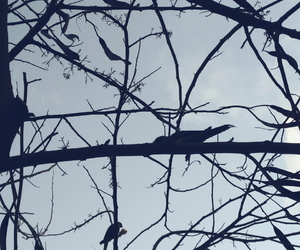 birds, blue, and gray image
